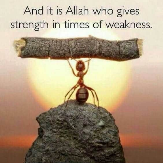 Best Allah Quotes and Sayings (33)