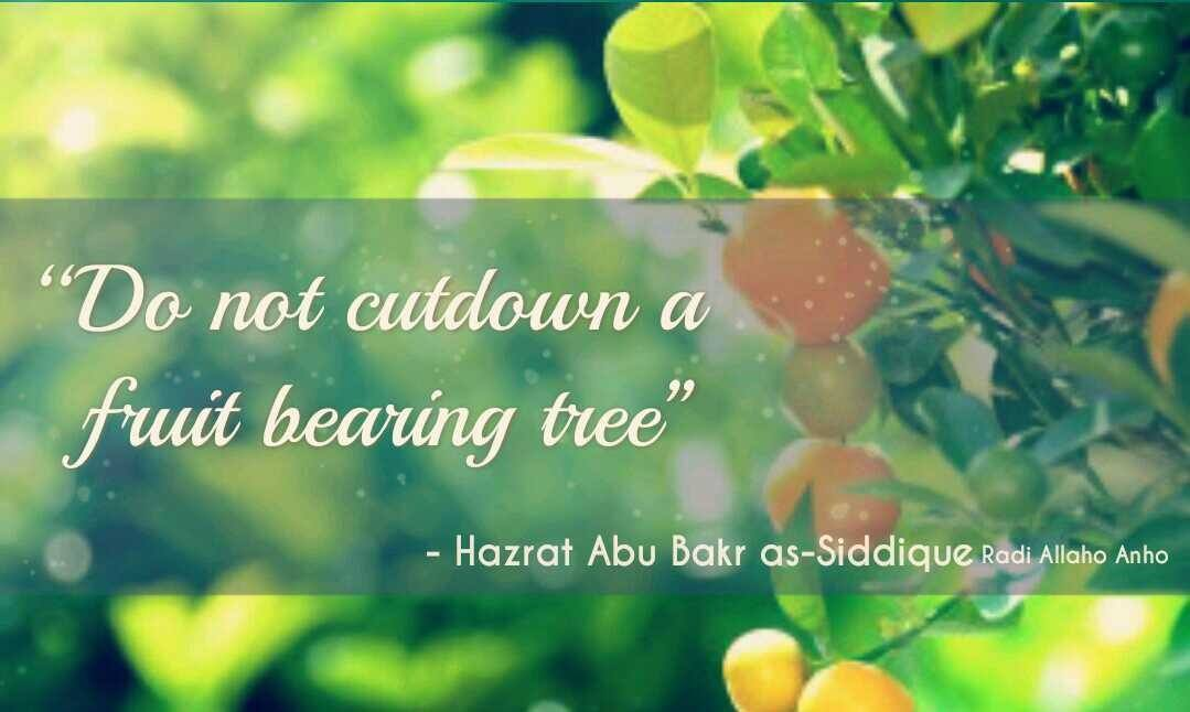 Hazrat Abu Bakar Saddique R.A Quotes and Sayings (4)