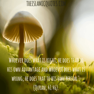 Judgement day quotes In Islam (12)