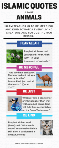 Islamic Quotes About Kindness Towards Animals (14)