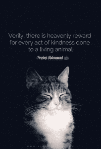 Islamic Quotes About Kindness Towards Animals (13)