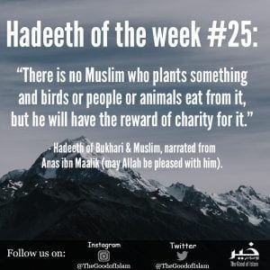 Islamic Quotes About Kindness Towards Animals (4)
