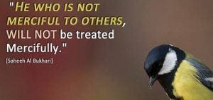 Islamic Quotes About Kindness Towards Animals (2)