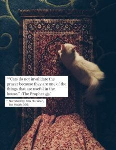 Islamic Quotes About Kindness Towards Animals (12)