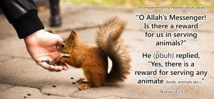 Islamic Quotes About Kindness Towards Animals (11)