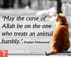 Islamic Quotes About Kindness Towards Animals (8)