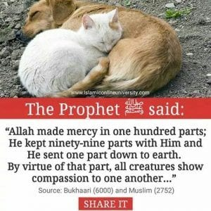 Islamic Quotes About Kindness Towards Animals (5)